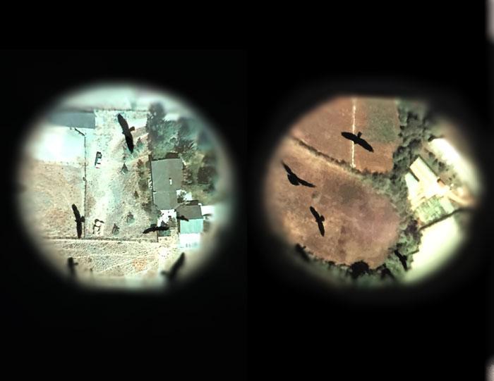 the hawk's eye : migration