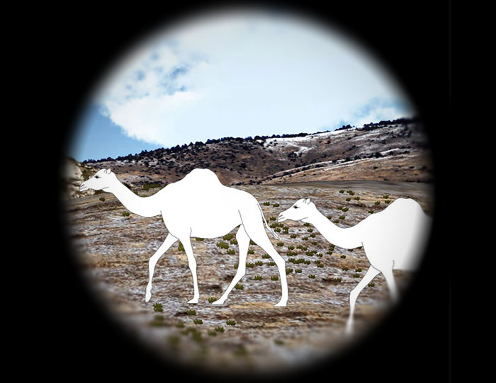 the ancient eye of the western camel
