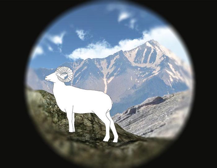 the eye of the bighorn sheep